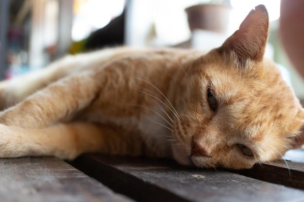 Домашний беззаботный кот спит на деревянном полу.