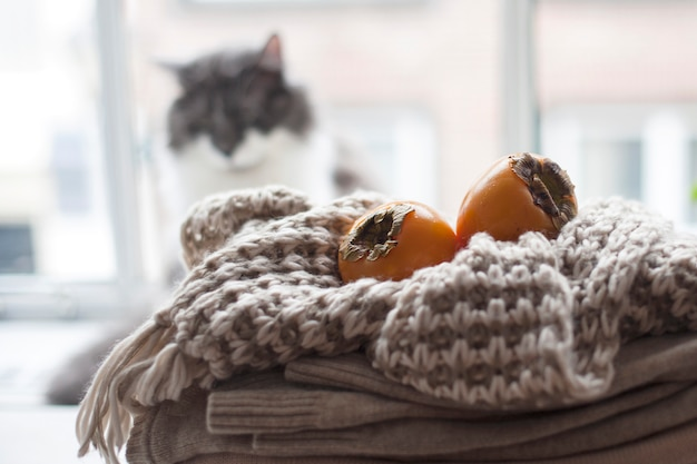 Home cat on the window, a lot of winter warm clothes, scarf and fruit autumn. cozy atmosphere and the city outside the window.