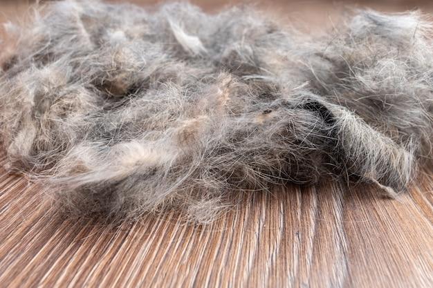 家の掃除ペットの毛皮の概念。クリーニングのためのペットの毛のクローズアップ。ウールアレルギー、ほこりの概念。