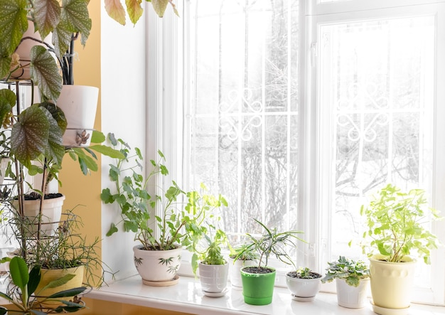 Home cozy interior with different green potted house plants near window and on windowsill in sunny winter day. cozy sustainable hobby. trendy home gardening. nature at home trend. copy space for text.