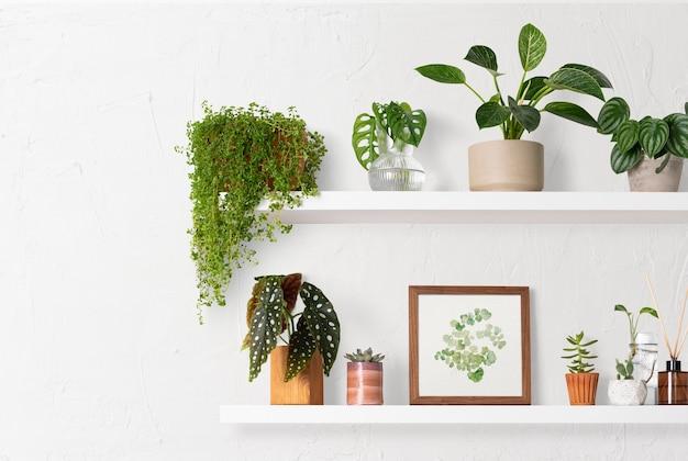 家の装飾屋内植物棚