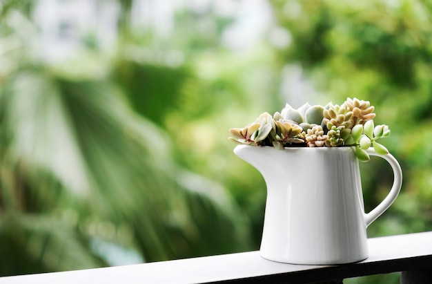 Home and garden concept of succulent plant in white ceramic jar at terrace