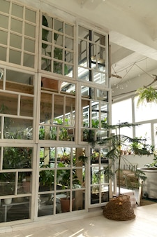 Home garden or greenhouse interior with house plant old wooden furniture and windows in retro style