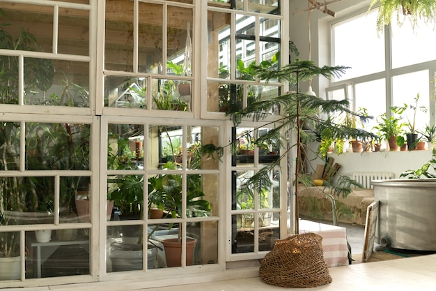 집 식물, 오래된 목재 가구 및 복고풍 창문이있는 집 정원 또는 온실 인테리어
