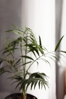 家の庭の植物。緑の植物の世話をしています。バスケットに大きな緑のヤシ。葉に水を噴霧します。植物に水を与えます。手のひらをリビングルームに植えます。セレクティブフォーカス