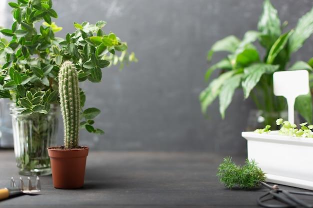 나무 배경에 선인장과 작은 채소가 있는 가정 정원 식물