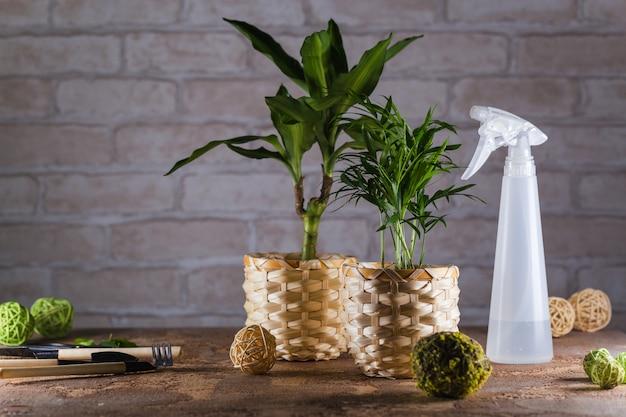 Домашний сад с горшечными растениями и садовыми принадлежностями