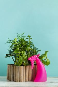Домашний сад с горшечными растениями и брызгами воды