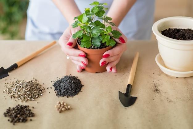 家の園芸の概念。植物の移植。植木鉢を持っている手。ガーデンツール機器。