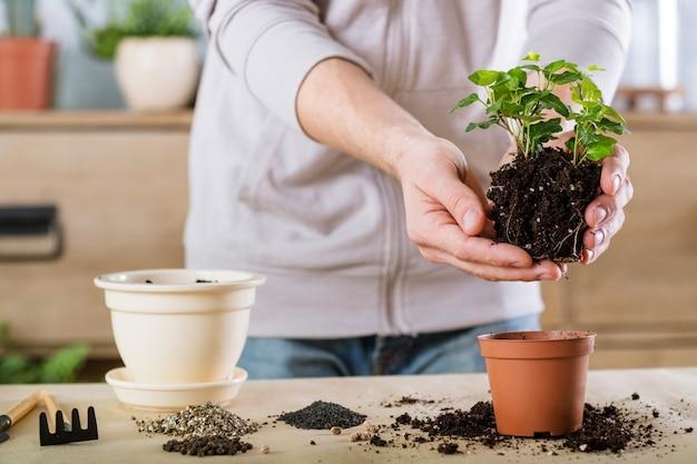 家の園芸の概念。植物の移植。観葉植物を植え替える手。