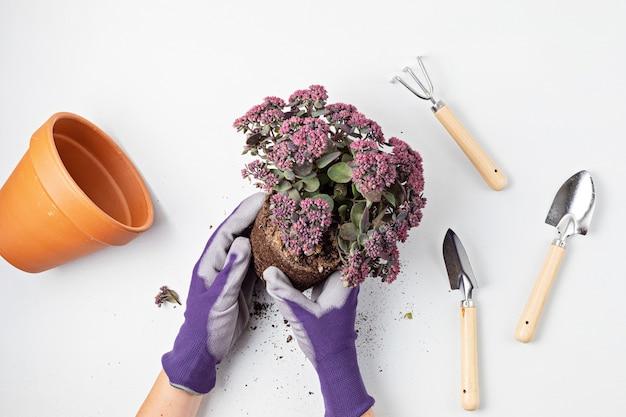 Концепция домашнего садоводства с посадкой суккулентов