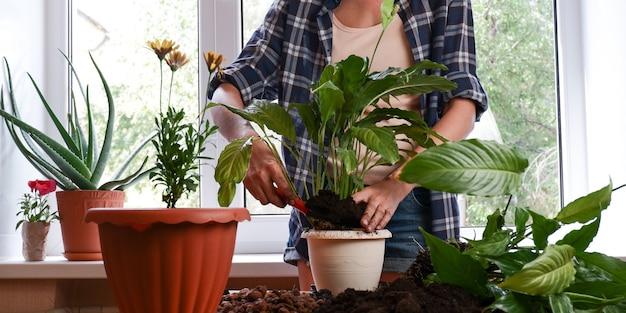 部屋の家の園芸の概念の女性