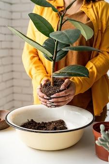 家庭菜園。若いイチジク植物を新しい植木鉢に移植する植物の世話をする黄色い服を着た女性の庭師