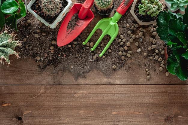 家の園芸花卉園芸女性が病気のサボテンを移植し、上から家の景色を緑化する植物の世話をします