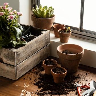 Fiori di giardinaggio domestico