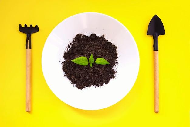 가정 정원 가꾸기. 노란색 배경에 식물 발아가 있는 소형 원예 도구와 흰색 접시. 상위 뷰, 성장 단계 개념입니다. 작은 관엽식물을 심기 위한 미니어처 도구.