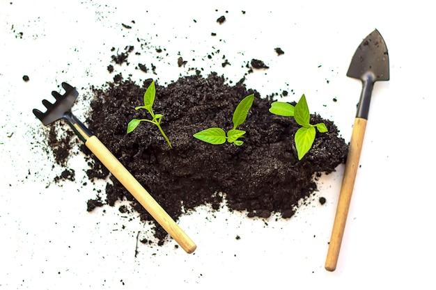 가정 정원 가꾸기. 흰색 바탕에 미니어처 원예 도구입니다. 평면도. 제로 폐기물. 호박 묘목이 흙에서 자라고 아침이 빛나고 있습니다. 작은 식물 성장의 근접입니다.