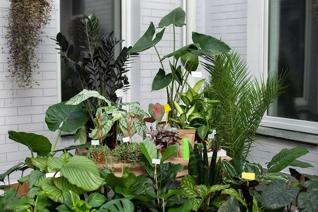 발코니에 집 정원 가꾸기 테라스의 화분에있는 관상용 식물과 관상용 식물