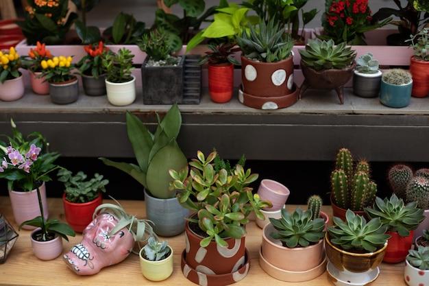 家庭菜園植物の手入れ家庭で鉢植えのミニ観葉植物