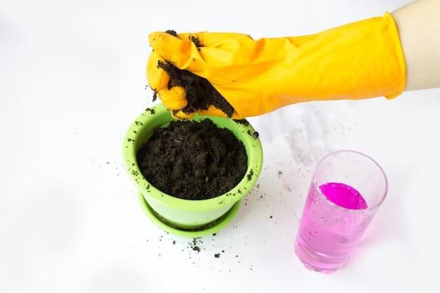 가정 원예, 식물 씨앗 심기. 묘목을위한 토양 비료.
