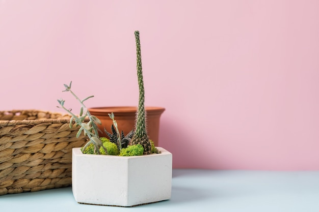 青とピンクの背景にホームガーデニングツール。春の家事。高品質の写真