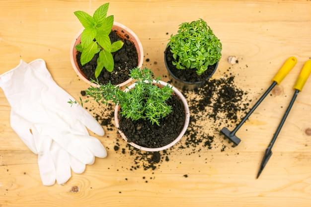 ホームガーデニング。木の板に手袋、鍋にミント、バジル、タイムブッシュ、および園芸工具のトップビュー