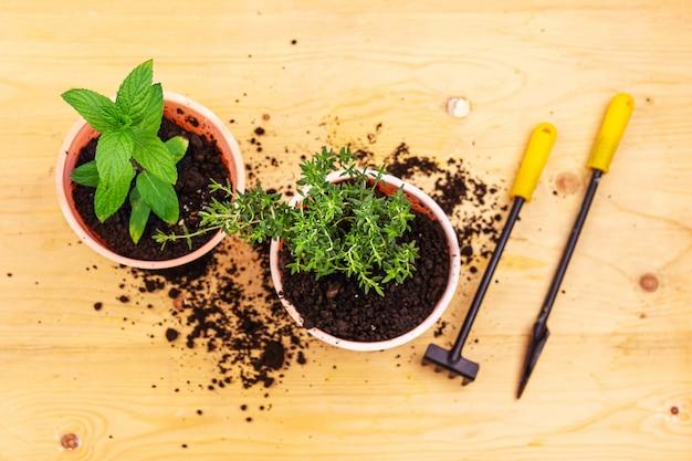 ホームガーデニング。木の板にミントとバジルブッシュ、および園芸工具のトップビュー