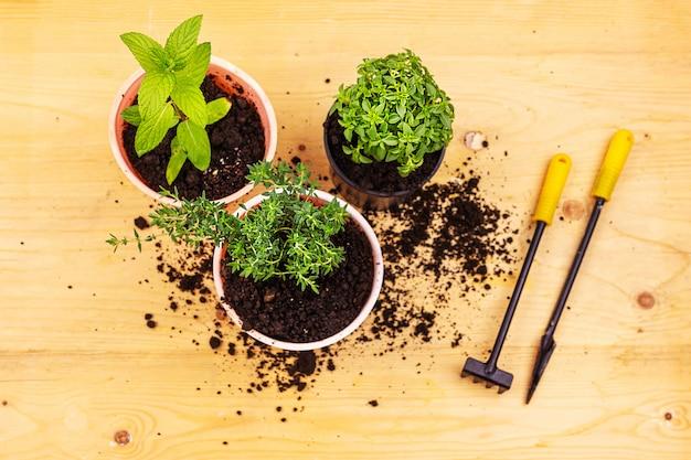 ホームガーデニング。木の板に鍋、および園芸工具のミント、バジル、タイムブッシュのトップビュー