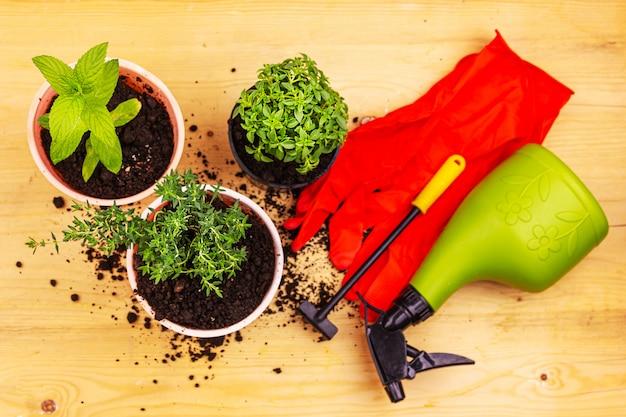 ホームガーデニング。木の板に赤い手袋、ミント、タイム、バジルブッシュポット、園芸工具のトップビュー