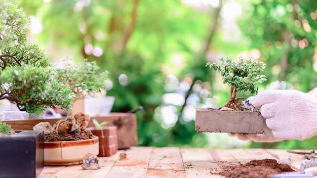 ロックダウン時の家庭菜園と自己検疫。コロナウイルス危機の際に植物園の土壌に種を蒔きました。リラックスして社会的な距離を置くために家にいてください。