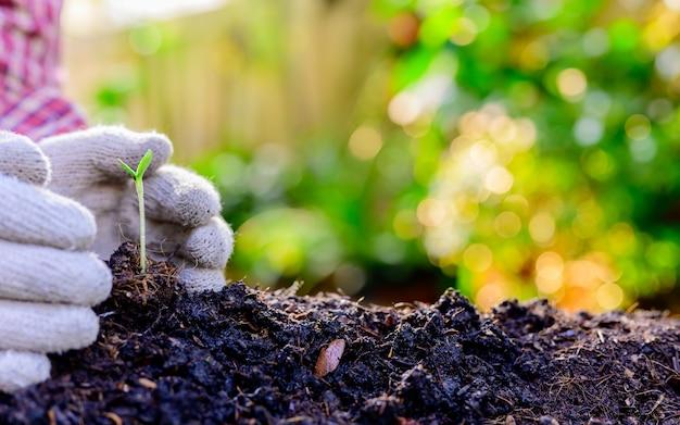 집에서 정원 가꾸기 잠금 및 자가격리. 코로나 바이러스 위기 동안 식물원에 나무를 심습니다. 휴식과 사회적 거리두기를 위해 집에 머무르세요.