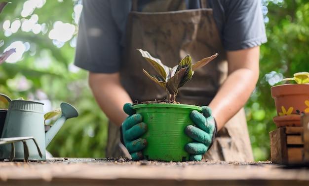 ロックダウン時の家庭菜園と自己検疫。コロナウイルス危機時の植物園でのレクリエーション活動。リラックスして社会的な距離を置くために家にいてください。