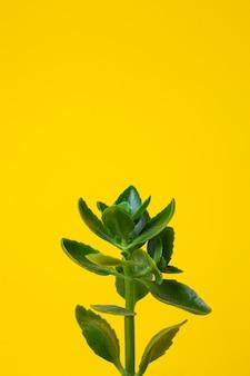 노란색 바탕에 집 녹색 꽃