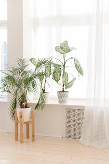 가벼운 창턱에 집 실내 식물. 밝은 인테리어에 냄비에 현대 식물. 집에서 야자수