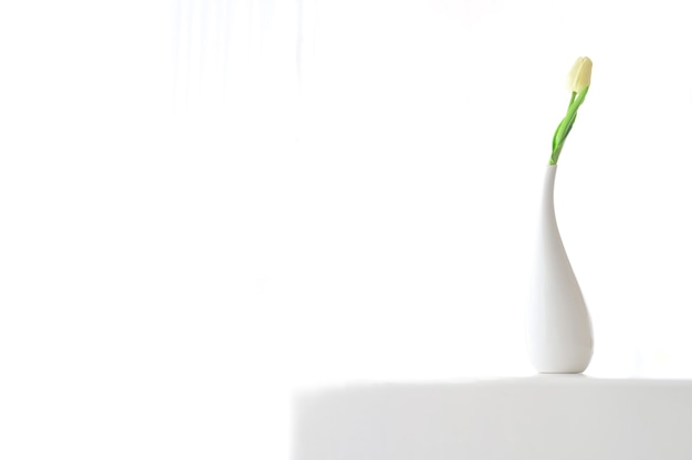 Home interior floral decor. minimal floral soft white composition  in vase on white wall background.