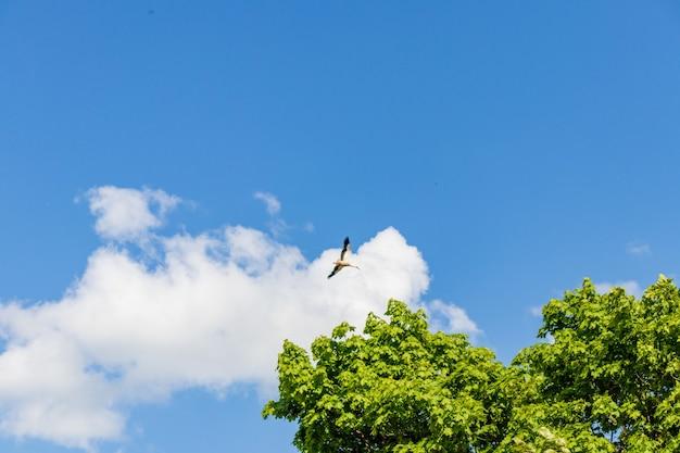 Home for migrating storks in sunny sky