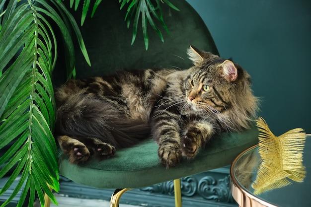 ベルベットの緑の椅子にヤシの木と緑のインテリアに横たわっているホームペットかわいい猫