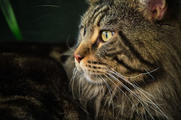 緑のインテリアに横たわっているホームペットかわいい猫