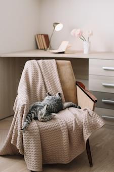 집에서 안락의 자에 누워 홈 애완 동물 귀여운 고양이. 귀여운 스코틀랜드 직선 회색 줄무늬 고양이 초상화.