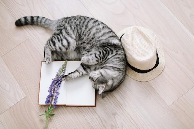 Домашнее животное милый котенок кошка лежит дома милый шотландский прямоухий кот в помещении портрет кошки милый кот в помещении съемка