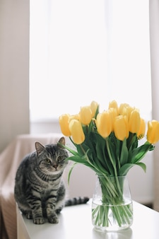 Домашний питомец милый котенок кошка с цветами в помещении