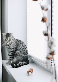 Домашний питомец милый котенок кошка с забавным видом сидит рядом с вазой с цветком хлопка