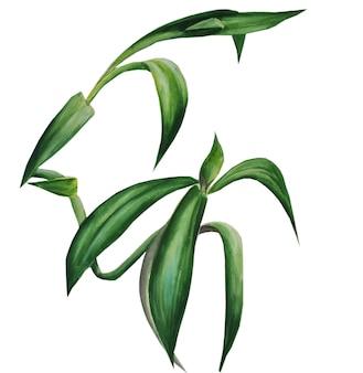 観葉植物。植物の水彩イラスト
