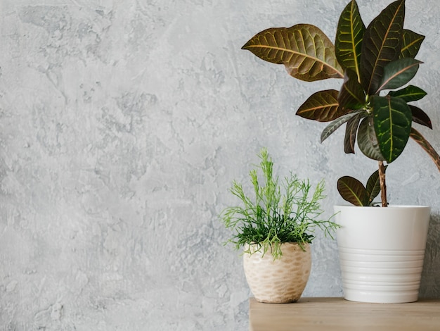 Home plant decor. modern minimalism. two flowerpots with houseplants. copy space