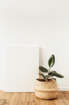 空白のキャンバスの前に家の植物のイチジク