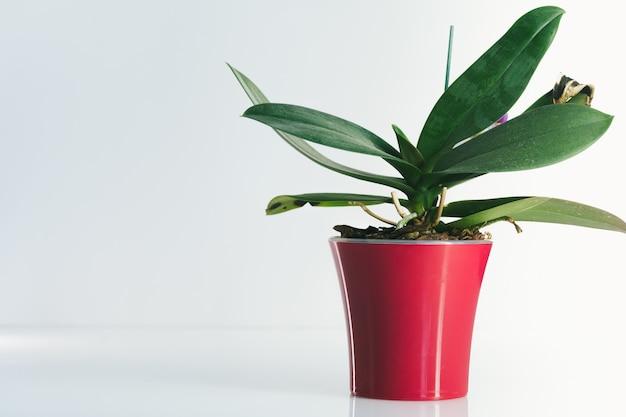 흰색 테이블에 빨간 냄비에 집 식물