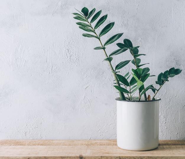 Домашнее растение на полке на серой стене