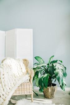 파스텔 블루 벽 앞에 집 식물, 셔터, 밀짚 의자 및 니트 격자 무늬.