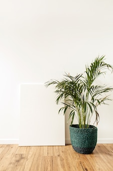Home plant tropical palm in front of blank canvas