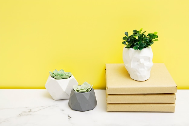 Home plants in concrete flowerpots with books on a table near the yellow wall. copy space